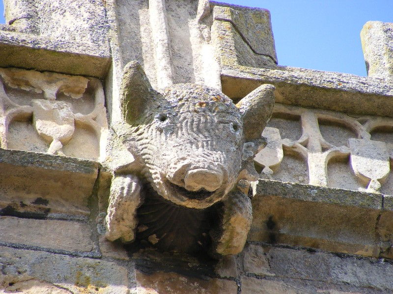 Gargoyle in the form of a pig © Laxton Church